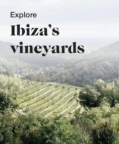 Explore Ibiza's vineyards