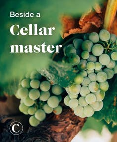 Beside a cellar master
