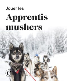 Jouer les apprentis musher