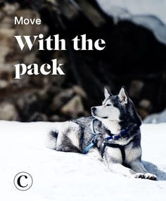 Move with the pack