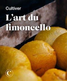 Cultiver l'art du limoncello