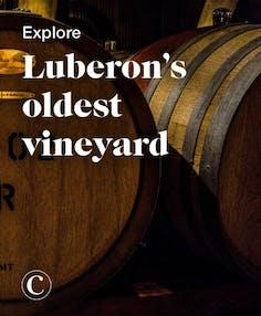 Explore Luberon's oldest vineyard