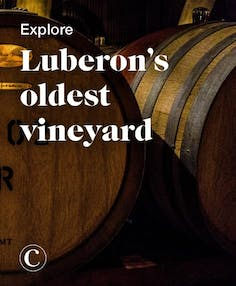 Explore Luberon's oldest vineyard