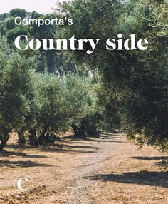 Comporta's country side