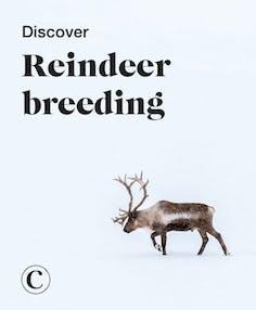 Discover reindeer breeding