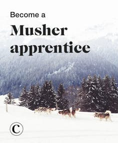 Become a musher apprentice