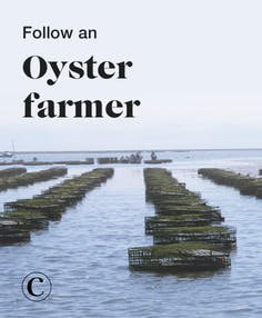 Follow an oyster farmer