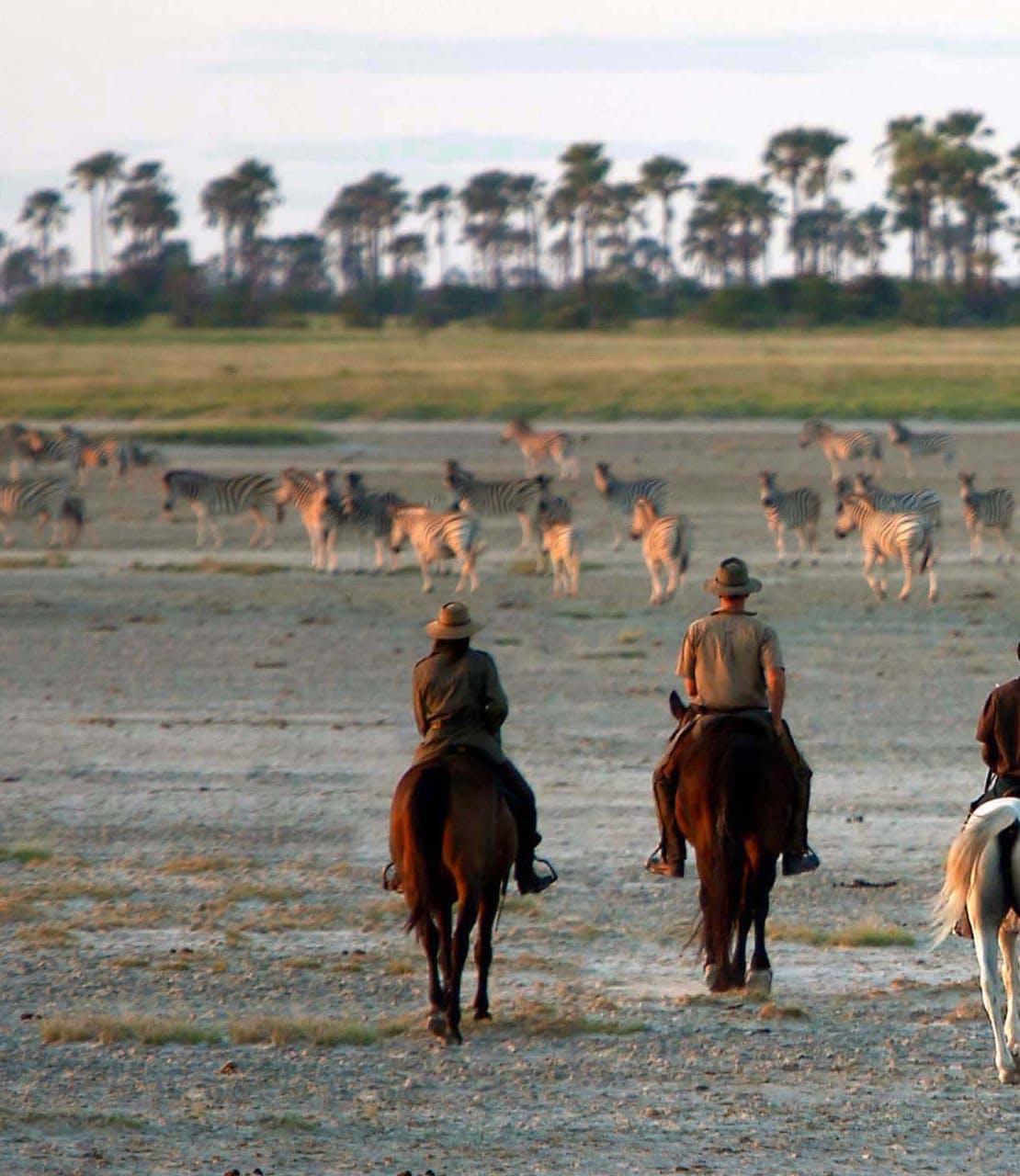 Riders following zebra