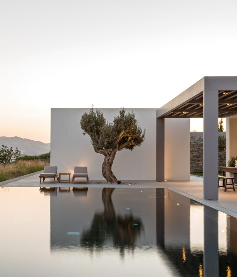 Modern pool with view of an olive tree